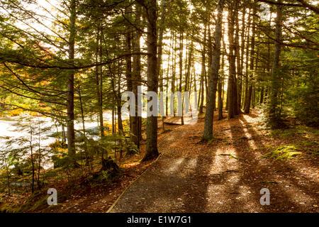 Mills Falls, Mersey River, Kejimkujik National Park, Nova Scotia, Canada - Stock Photo
