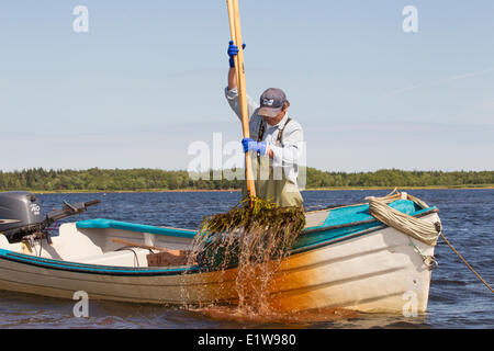 oyster Fisherman, West Prince, Prince Edward Island, Canada - Stock Photo