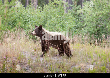 watson lake black singles We also offer 8 day single species hunts for  black bear and wolf – 8 days august 24  upon your arrival into watson lake you will be flown via northern.