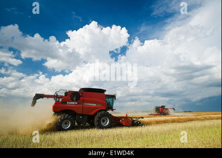 combine harvesters work in a field during the canola harvest, near Dugald, Manitoba, Canada - Stock Photo