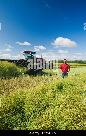 young farmer swathing a canola field, near Lorette, Manitoba, Canada - Stock Photo