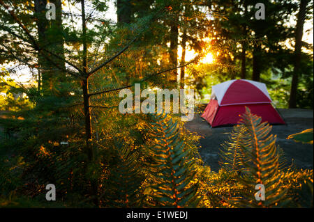 A tentsite is bathed in early morning light at the Zuiderzee Campground Resort just outside Nanaimo.  Nanaimo Vancouver - Stock Photo