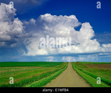 country road with cumulonimbus cloud mass in the background, near Willow Bunch , Saskatchewan, Canada - Stock Photo