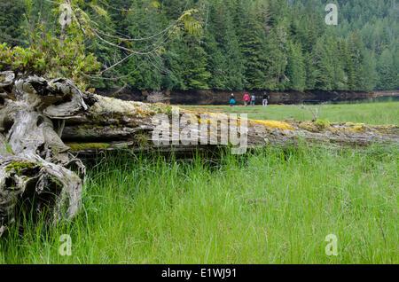 Guests wander shoreline at Nimmo Bay Wilderness Resort, British Columbia, Canada - Stock Photo