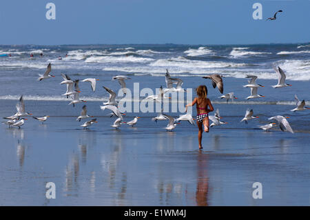 Young girl running along beach among flock of Royal Terns (Thalasseus Maximus)in flight.   St Augustus ,florida, - Stock Photo
