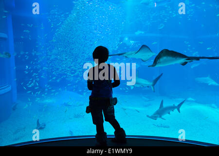 Teenager gazing as sea life in front of the 9-meter deep tank at Osaka Aquarium Kaiyukan. One of the largest public - Stock Photo