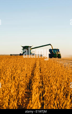 a combine harvester unloads soybeans into a grain wagon on the go during the harvest, near Niverville, Manitoba, - Stock Photo