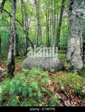 Erratic rock and trees in Kejimkujik National Park, Nova Scotia - Stock Photo