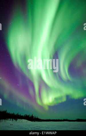 Aurora borealis (northern lights), boreal forest, Yellowknife environs, NWT, Canada - Stock Photo