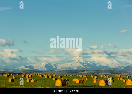 Baled Hay, Foothills, Black Diamond, Alberta, Canada - Stock Photo