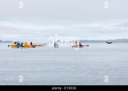 Kayakers watch as a large Humpback Whale (Megaptera novaeangliae) sounds in waters within the Broken Island Group. - Stock Photo