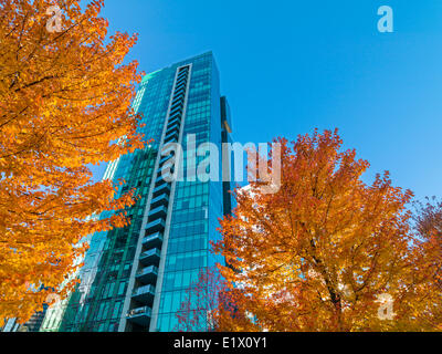 Vancouver office tower and maple trees in fall, Vancouver, British Columbia, Canada - Stock Photo