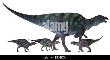 Maiasaura is a large duck-billed dinosaur that lived in North America in the Cretaceous Era shown here with several - Stock Photo