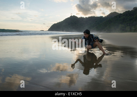 baby green turtle (Chelonia mydas) released to the sea for the first time, Sukamade Beach, Java, Indonesia - Stock Photo
