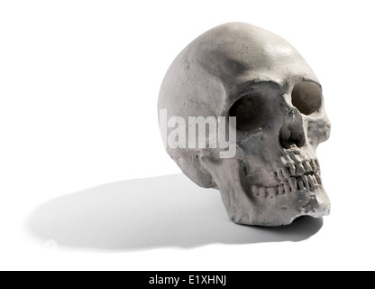 Model of a human skull - Stock Photo