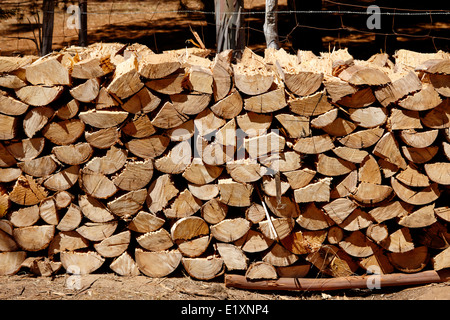 cut logs stacked for fuel eucalyptus forest los pellines chile - Stock Photo