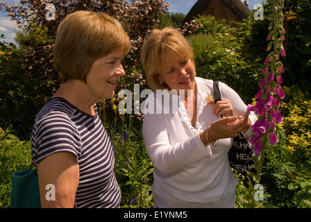 Two elderly ladies examining Foxglove plants in an English rural country garden in village of Froyle, Hampshire, - Stock Photo