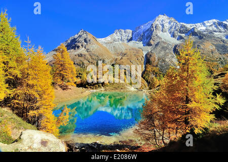 Lac Bleu with autumnal larch trees in Val d'Arolla, Mt Dents de Veisivi at the back, Canton of Valais, Switzerland - Stock Photo