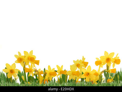 Spring flowers isolated over white background - Stock Photo