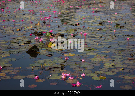 The moat at Angkor Wat in Cambodia, the largest monument of the Angkor group and an architectural masterpiece. - Stock Photo