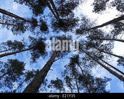 treetops - Stock Photo