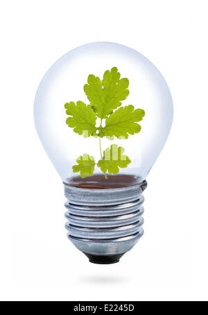Light bulb with leaves inside. - Stock Photo