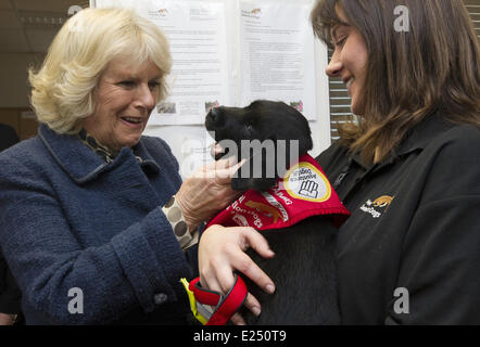 Camilla, Duchess of Cornwall, meets Charlie, a black labrador puppy who will be trained to detect Type 1 diabetes, - Stock Photo