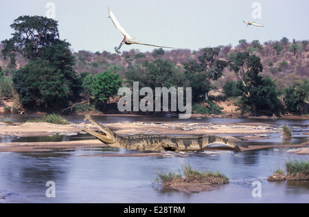 Sarcosuchus - Stock Photo