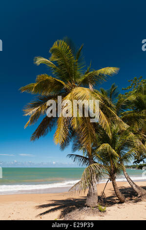 France, Guadeloupe (French West Indies), Basse Terre, Deshaies, Cluny Beach - Stock Photo