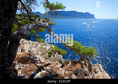 France, Bouches du Rhone, Bay of Cassis, Cassis, entrance to the Calanque de Port Miou, Cap Canaille in the background - Stock Photo