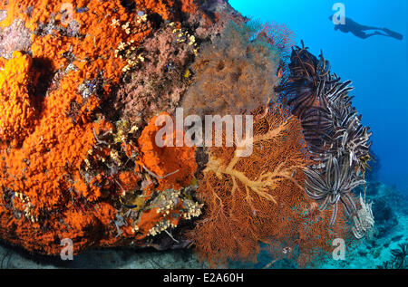 Philippines, Palawan island, a coral reef - Stock Photo