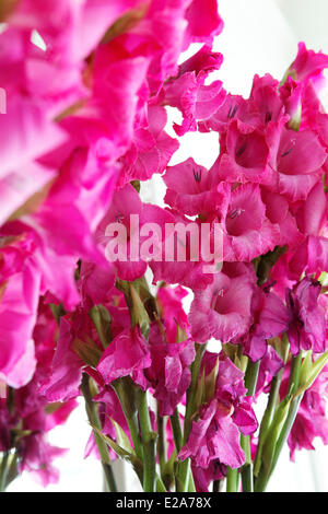 France, Nord, Lille, Maison Theodore, bed and breakfast top of the range, bouquet - Stock Photo