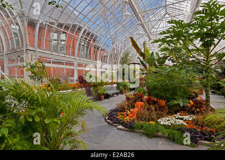 Canada, Quebec Province, Montreal, Westmount, the city library's greenhouses - Stock Photo