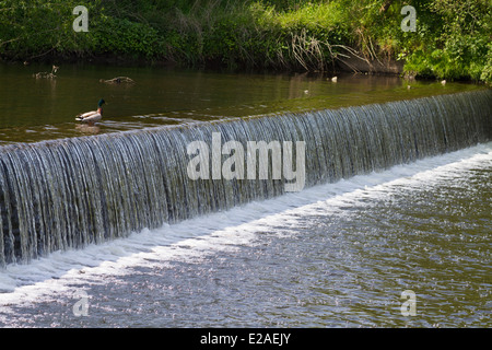weir cascades down stream with a duck looking on - Stock Photo