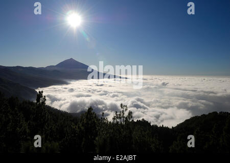 Spain, Canary Islands, Tenerife, mountains road TF 24, Ortuno Mirador, The Teide volcano above a sea of clouds - Stock Photo