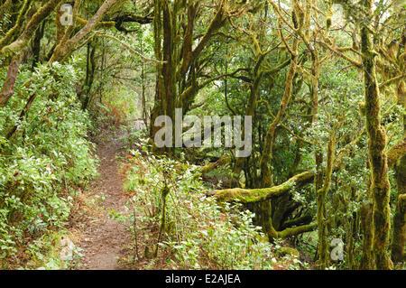 Spain, Canary Islands, La Gomera, National Park of Garajonay, the rainforest - Stock Photo