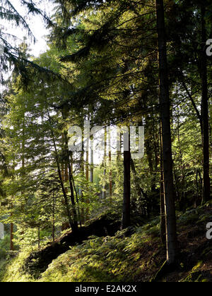 France, Alsace, feature : Felder's Alsace, forest - Stock Photo