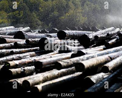 France, Alsace, feature : Felder's Alsace, rainforest - Stock Photo
