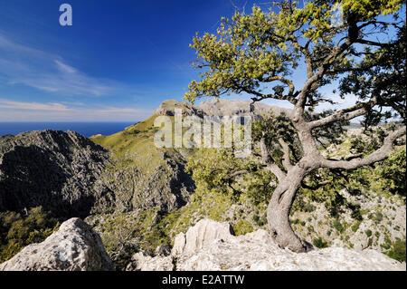 Spain, Balearic Islands, Mallorca, Sa Calobra, landscape of the northwest coast - Stock Photo