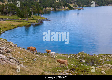 Site rencontre pyrenees orientales