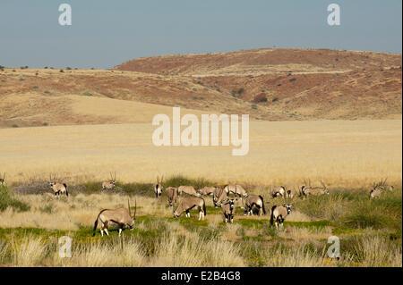 Namibia, Damaraland, Palmwag Concession, Gemsbok (Oryx gazella) - Stock Photo