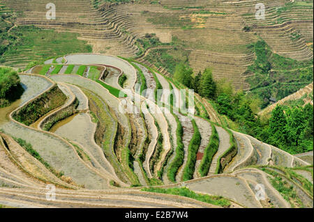 China, Guangxi Province, Longsheng, rice terraces at Longji - Stock Photo