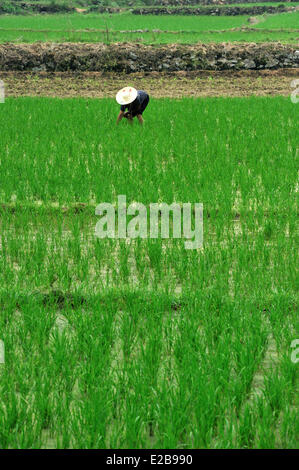 China, Guangxi province, Guilin region, rice field - Stock Photo