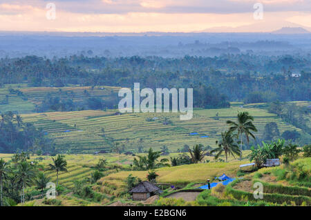 Indonesia, Bali, the rice fields of Jatiluwih, the subak system, listed as World Heritage by UNESCO, cooperative - Stock Photo