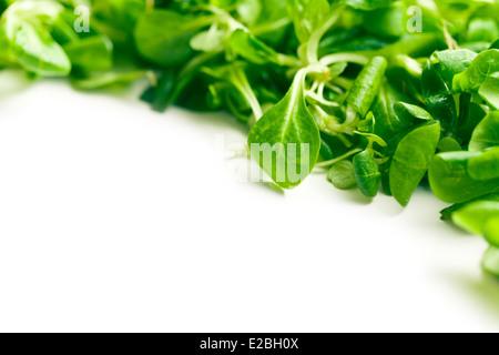 corn salad, lamb's lettuce on white background - Stock Photo