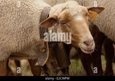 France Hautes Alpes Les Terrasses sheep wooden collar carved by the shepherd - Stock Photo