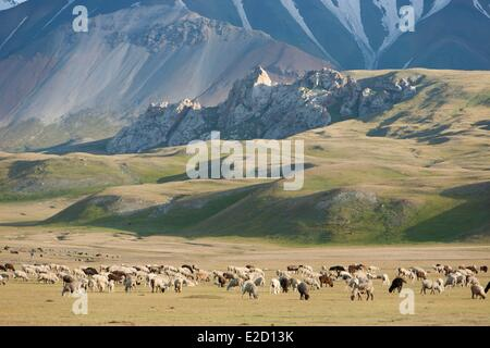Kyrgyzstan Naryn Province Arpa valley flock of sheeps on summer pastures at the foothills of the Tian Shan mountain - Stock Photo