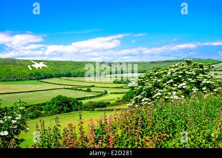 A white horse carved into hillside Osmington Dorset - Stock Photo