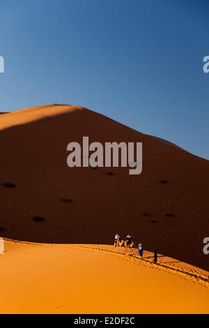 Morocco, Tafilalet region, Merzouga, erg Chebbi desert, camel trek on sand dunes - Stock Photo