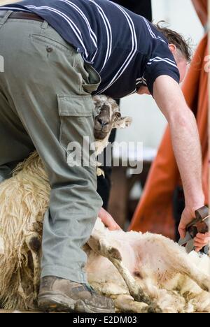 Ireland Galway County Maam Cross Connemara sheep shearing competition - Stock Photo